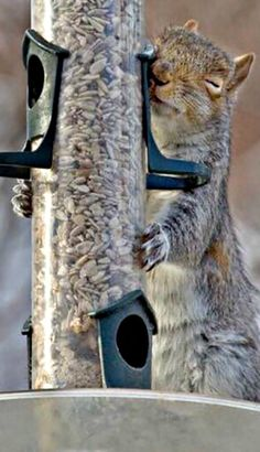 'I really love you Tree, because you always give me food each time I come to you!' - Squirrel Loves the Tree