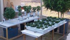 5 passos para construir um sistema hidropônico #jardim #hidroponico