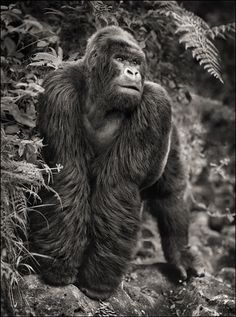 What a man >_< Conserving Africa's Wildlife through photography by Nick Brandt