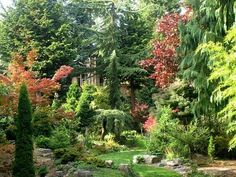 gardening with conifers gives us structure, privacy and year round interest.
