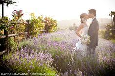 -david-champagne-photography- I think I finally found my dream wedding location, a lavender farm!