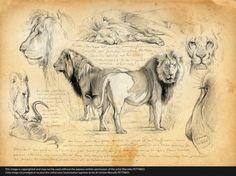 Lions I Marcello Pettineo