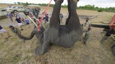 See What It Takes to Move 500 Elephants