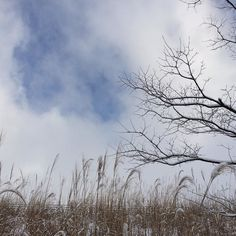 |||空 冬 曇り 雪 素材として使用可||| January 20 2016 at 06:06PM ||| nagamel.tumblr.com