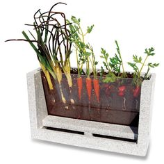 This is a great idea of how to have a classroom garden in a way that the students' can see what is happening under ground.