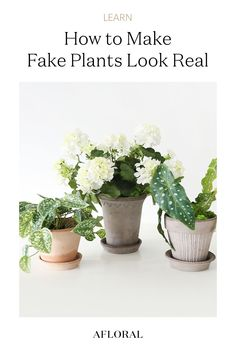 Are you a self-proclaimed houseplant killer? Does your space lack light? Or are you just over trying to balance it all and keep your plants pleased? We're right there with you. Thankfully, artificial plants have come a long way, and it's never been easier to make a fake plant look real. Follow along below for our tips + tricks on buying, planting, and keeping your artificial plants looking like the real deal. Shop fake plants and outdoor planters at Afloral.com. Organic Lines, Real Plants, Outdoor Planters, Houseplant, Artificial Plants, Natural Looks, Planting, Grass, Space