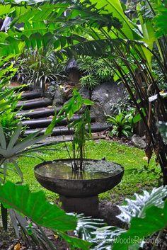 Tabu: Tropisches Paradies in Cairns, Queensland - Tropischer Garten Mehr - Small Tropical Gardens, Tropical Garden Design, Tropical Landscaping, Tropical Plants, Luxury Landscaping, Landscaping Company, Urban Balcony, Low Maintenance Garden Design, Balinese Garden