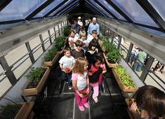 The plants that could move: Bozeman bus takes greenhouse on the road