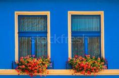 Imagine de stoc: Ferestre · flori · fereastră · floare · oraş · perete