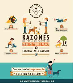 infografia perros - Buscar con Google