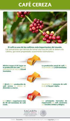 El café es uno de los cultivos más importantes del mundo. Las sensaciones que derivan de tomar una taza de café se deben a la cafeína, que tiene propiedades suavemente estimulantes. SAGARPA SAGARPAMX