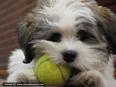 Google Image Result for http://images2.fanpop.com/image/photos/9400000/Cute-Puppy-puppies-9415397-500-375.jpg