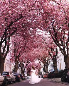 If you want to enjoy spring in Germany, then be sure to head to the North West city of Bonn. There, you'll soon discover the best of Bonn cherry blossom! Cherry Blossom Tree, Blossom Trees, Bonn Germany, Happy New Week, Secret Location, The Cloisters, Old Churches, Travel Abroad, Traveling By Yourself