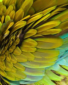 chartreuse macaw feathers by brian k. Patterns In Nature, Textures Patterns, Color Patterns, Henna Patterns, Foto Macro, Fotografia Macro, Mellow Yellow, Bird Feathers, Yellow Feathers