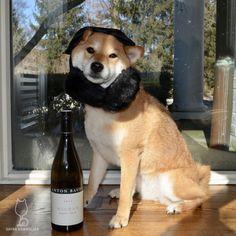 2014 Anton Bauer Wagram Pinot NoirKeeping warm with my earmuffs... #shiba