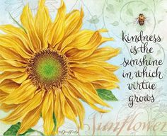 "Sunflower -♥- ""Kindness is the sunshine in which virtue grows"" Sunflower Quotes, Sunflower Pictures, Sunflower Art, Sunflower Garden, Sunflower Tattoos, Sunflower Kitchen, Sunflowers And Daisies, Sun Flowers, You Are My Sunshine"