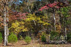 Colorful Woodlands - Natchez Trace by Debra Martz www.debramartz.com