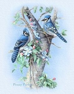 BlueJays Penny Parker Blue Birds in Spring Vladimir Kush, Beatrix Potter, Illustrations, Graphic Illustration, Thomas Kinkade, Bird Wings Costume, Penny Parker, Claude Monet, Blue Jay Bird