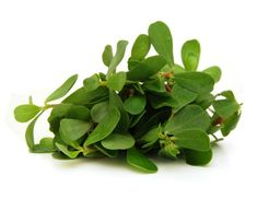 A popular green in Mexico. Because of its reputed medicinal effects, also used in herbal healing. Contains approx 50 heirloom seeds Purslane Recipe, Camping Meals, Camping Recipes, Camping Stove, Wild Edibles, Small Meals, Calendula, Medicinal Plants, Outdoor Cooking