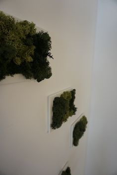 Bring nature home with this amazing Iceland moss picture. It does not just make you more relaxed, but the best green decoration for your home or office. Do not hold back yourself if you want to pet it, it feels awesome! Picture Sharing, Awesome, Amazing, Make It Yourself, Green, Pictures, Painting, Decor, Art