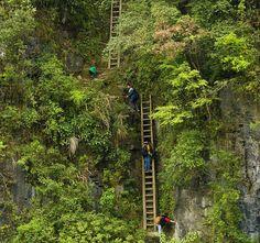 Escalada Alunos em escadas de madeira inseguros