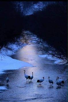 Ducks, Bird, Animals, Animales, Animaux, Birds, Animal, Animais