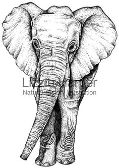elephant illustration - Google Search