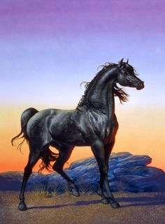 Ruth Sanderson - the 1970s paperback cover for The Black Stallion by Walter Farley