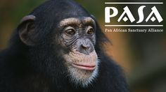 Help stop the smuggling of meat from critically endangered species into the U.S. before it's too late. Sign PASA's petition today.