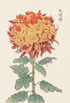 Keika Hasegawa, Chrysanthemums, 1893, Wood Block Prints