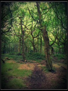 Buck woods, Bradford, West Yorkshire, UK