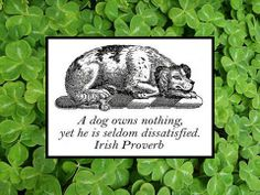 Irish Proverb: A dog owns nothing, yet he is seldom dissatisfied.
