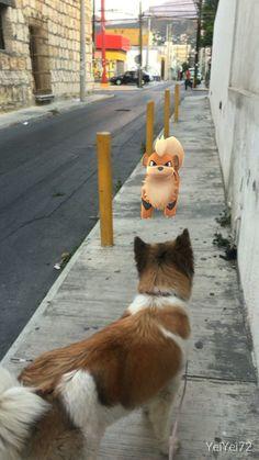 """Eles existem: jogadores registram 14 animais """"olhando"""" para Pokémons"""