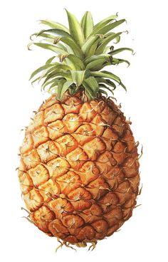 Ananas comosus (pineapple fruit) by Graham Rust - ananas jadalny (owoc) autorstwa Grahama Rusta :)