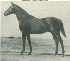 Hard Tack- Seabiscuit's father. Son of Man O' War