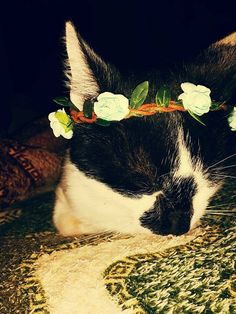 #flowers#cat