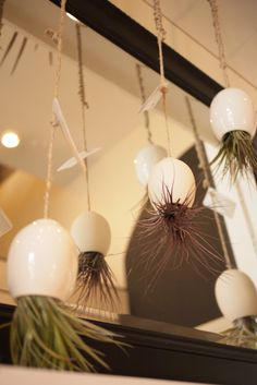 Hanging Air Plant Pods (by mudpuppy)