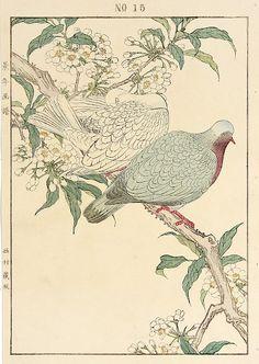 "Antique prints of ""Emerald Dove, Plum Tree"" from 1891 Keinen Imao Woodblock Edition Birds & Flowers Japan Botanical Drawings, Botanical Art, Botanical Illustration, Illustration Art, Japanese Drawings, Japanese Prints, Japanese Bird, Japanese Plum, Davidson Galleries"