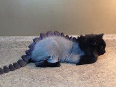 A Dragon Haircut For Cats