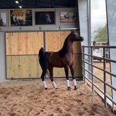 421 Me gusta, 6 comentarios - M. Funny Horse Memes, Funny Horses, Cute Horses, Pretty Horses, Horse Love, Funny Horse Videos, Beautiful Arabian Horses, Most Beautiful Horses, Majestic Horse