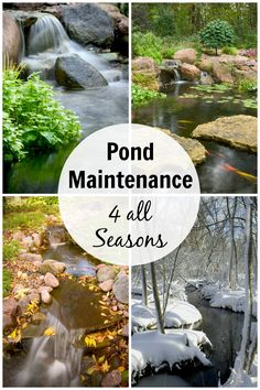 How to maintain your pond in all seasons 45 special diy garden pond waterfall ideas Backyard Water Feature, Ponds Backyard, Garden Ponds, Outdoor Fish Ponds, Garden Fountains, Pond Landscaping, Landscaping With Rocks, Pond Maintenance, Farm Pond