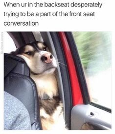 Funny Animal Pictures of the Day - 24 Pictures - Daily LOL Pictures - Funny Animal Pictures . - Funny animal pictures of the day – 24 pictures – Daily LOL pictures – Funny animal pictures o -