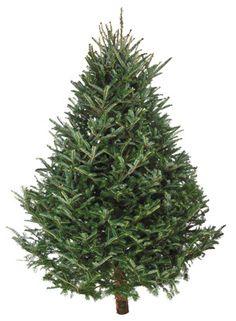 getting a real christmas tree to decorate Fresh Christmas Trees, Natural Christmas, Christmas Tree Farm, Christmas Mood, Very Merry Christmas, Green Christmas, Country Christmas, Christmas Colors, Xmas Tree