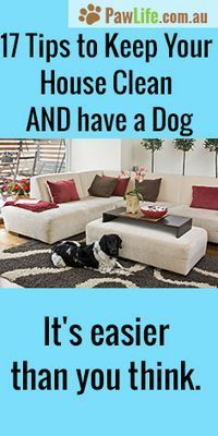 It's easy to keep your home clean and fresh while having a dog inside with my 17 tips to keep your house clean and have a dog will have your home in tip-top shape. #cleanhouse #hacks #insidedog