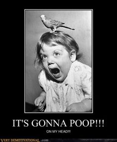 Funny pictures with captions: Birds are scary ny Funny Demotivational Posters funny demotivational pics Vintage Humor, I Smile, Make Me Smile, Haha Funny, Funny Shit, Funny Ads, Freaking Hilarious, Funny Stuff, Scary Birds