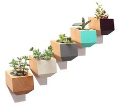The Douglas Fir Sidecars, wall mounted Boxcar Planters. Available in (L to R) Natural, White, Slate, Teal, and Eggplant. #succulentplanter #wallmounted #planter #BoxcarPlanter #icff2016 #DMMilkStand #4004