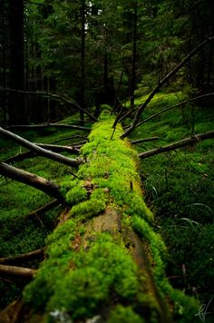 Planet Earth: The veteran by Andrei Verdeanu on Forest Path, Forest Floor, Tree Forest, Forest Scenery, Dark Forest, Nature Verte, Moss Garden, Old Trees, Magical Forest