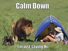 Calm Down, I'm Just Saying Hi funny lol funny quotes humor funny pictures funny photos funny images hilarious pictures Funny Shit, The Funny, Funny Jokes, Funny Stuff, Funny Fails, Funny Pranks, Funny Animal Pictures, Funny Photos, Funny Animals