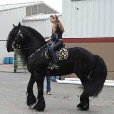 Most Beautiful Horses, All The Pretty Horses, Animals Beautiful, Cute Animals, Large Animals, Stunningly Beautiful, Beautiful Creatures, Absolutely Gorgeous, Friesian Horse
