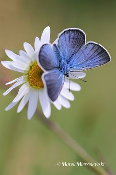 beautiful velvety texture #butterfly